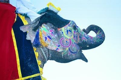 elephant_trunk_curled.jpg