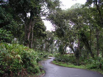 the_road_in_thekkady_3_may