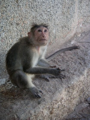 monkey_looking_up_28_nov.JPG