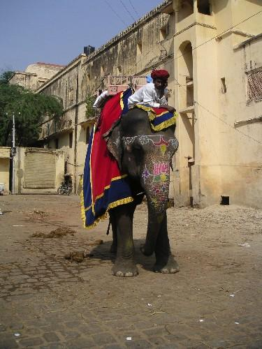 our_elephant_and_driver_25_oct.JPG