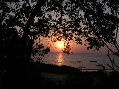 sun_between_trees2_10_feb_04.jpg