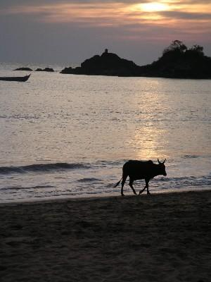 sunset_with_single_cow_4_jan_04.JPG