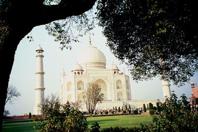 taj_framed_by_tree_10_mar.jpg